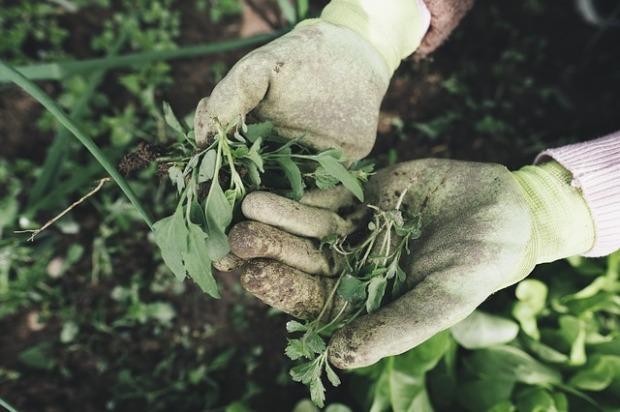 gardening-2518377_640